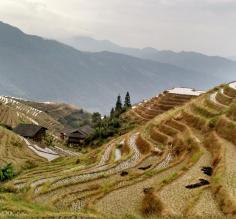 Rice terraces. Adventures in China!
